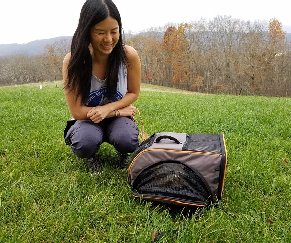 Kitty Adventures with Pet Magasin Travel Backpacks | @fairyburger