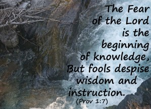 Read more about the article Finding Wisdom