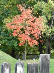 fall in VT