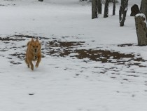 fannie in the snow