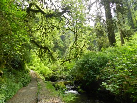 lower trails munson creek falls state historic site