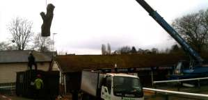 Indian Bean Tree - Crane removal and felling, Worcester