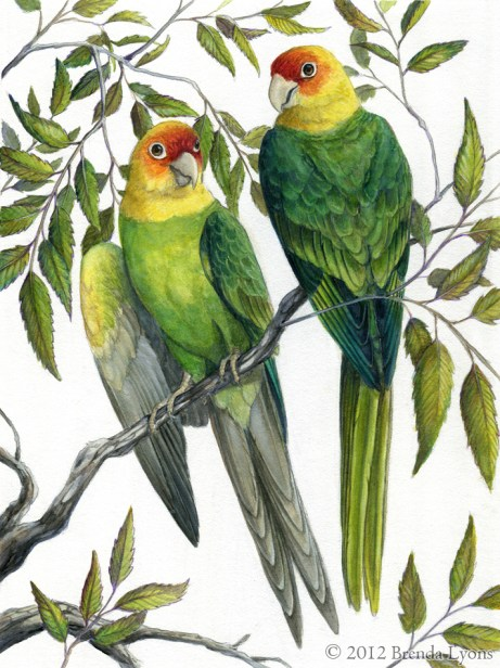 The Carolina Parakeet