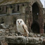 Owl Ring Delivery wedings events falconry