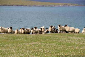 Berneray, the Outer Hebrides