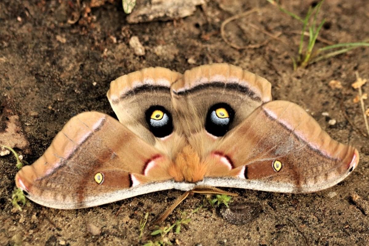 symbolic moth