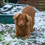 Playing in snow - 10 months
