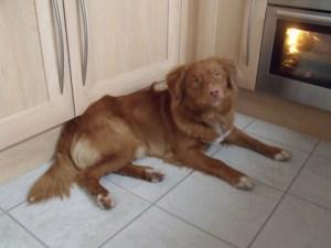 Dexter waiting for dinner!