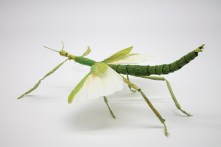 Crepe_Paper_Insects_PaperArt_Goliath_Stick_Insect_by_faltmanufaktur01