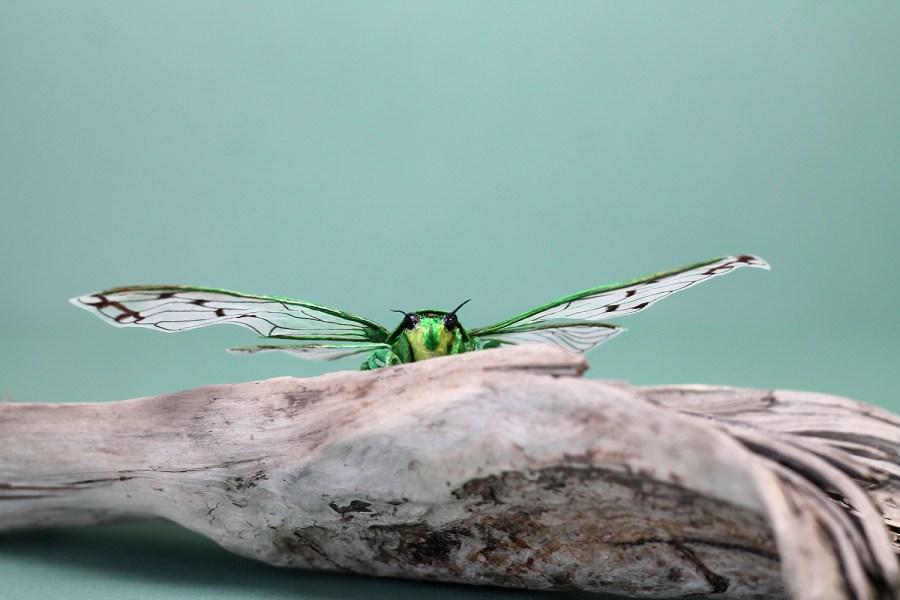 Cicada Paper Sculpture