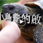 小乌龟的启示 (视频)