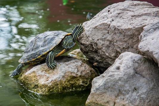 健康教育-小烏龜的啟示