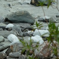 Eiswürfel, die der Fox Gletscher so abgeworfen hat