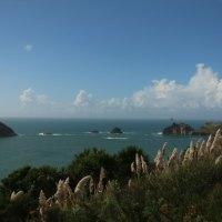 Ausblick auf die Küste an der Cathedral Cove