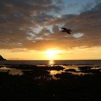 """Sonnenuntergang über Angel Island - Hier wurde der letzte """"King Kong"""" gedreht"""