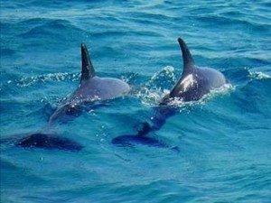delfine