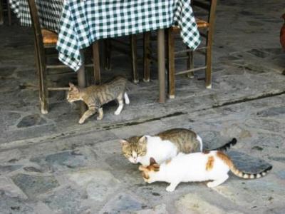 Streunende Katzen ...