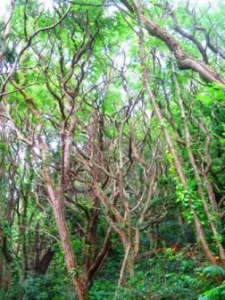 Wald. Mit oder ohne Riesenspinnen?