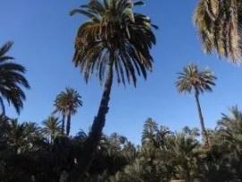 L afamille nomade à La palmeraie d'Elche