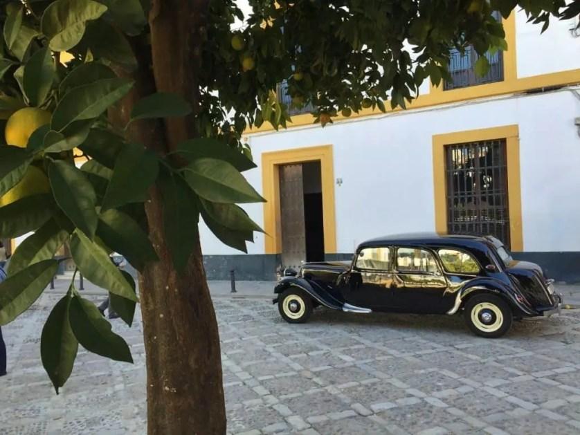 Famille nomade digitale en Andalouise-Seville en novembre et ses orangers