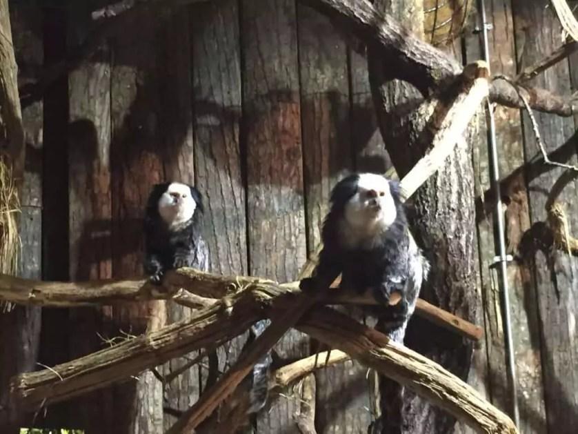 famille nomade digitale-Parc zoologique de Thoiry- couple de tamarin
