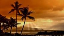 crepuscule-ete-palmiers-550x309