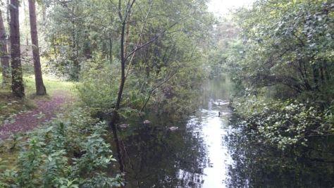 689 Bungalows? Ja, aber schön integriert in Wald, Wiesen und Wasser.