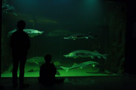 donau-donaudelta-tulcea-museum-aquarium