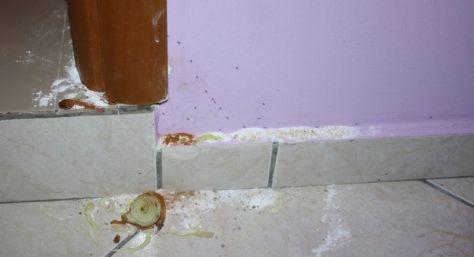 Hausmittel gegen Ameisen im Haus