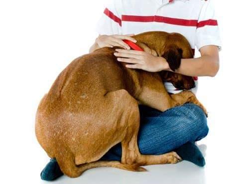 Trastorno por estrés postraumático en perros