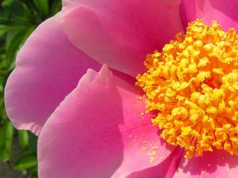 Natural Remedies For Spring Allergies Treating Spring Allergies FamilyEducation