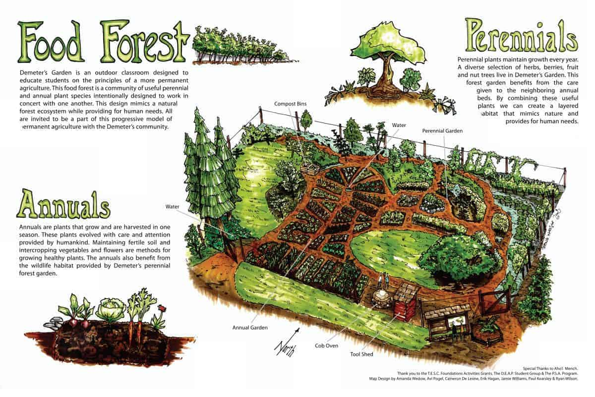 Grow a Permaculture Garden (Less Work + More Yields ... on Backyard Permaculture Design id=18357