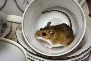 Here's Why Having a Mouse Problem Is Worse Than You Thought   Family Handyman