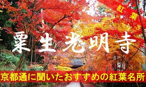 kouyou-kyouto-aono-2376