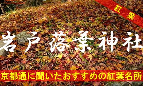 kouyou-kyouto-iwato-2115