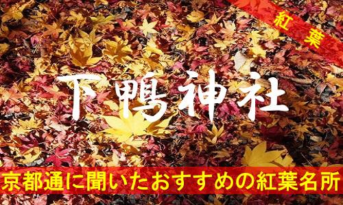 kouyou-kyouto-shimokami-2687
