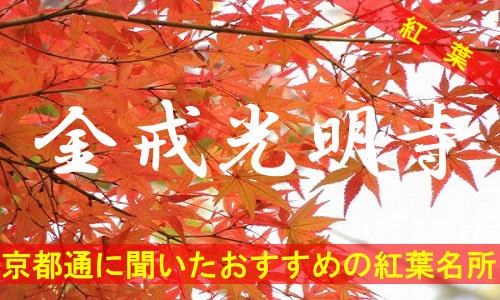 kouyou-kyouto-konkai-3481