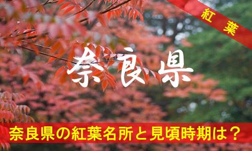 kouyou-na-2-2931