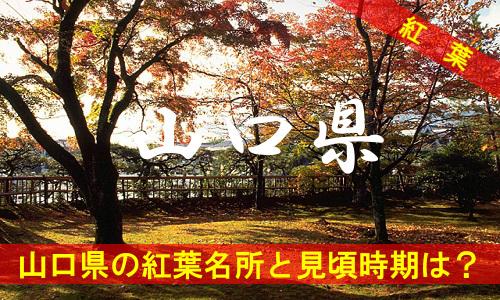 kouyou-ya-2-3129