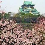 大阪城の梅の見頃時期と梅まつり・開花情報