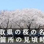 鳥取県の打吹公園など桜名所60箇所の見頃時期