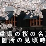 三重県の三多気など桜名所80箇所の見頃時期