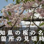 愛知県の名古屋城など桜の名所60箇所の見頃時期