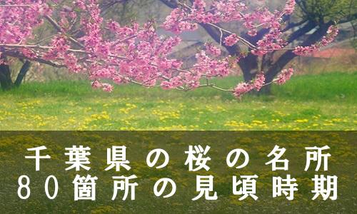sakura-39-6888