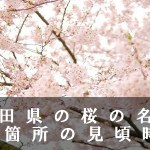 秋田県の千秋公園など桜の名所40箇所の見頃時期