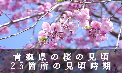 sakura-47-6944