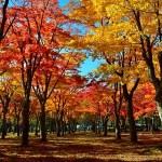 東京都 高尾山 の紅葉狩り!見頃時期やアクセス情報・動画など