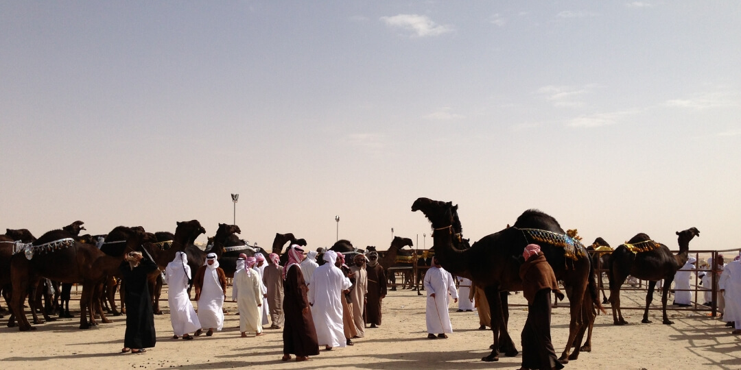 A beginners guide to attending the Al Dhafra Festival