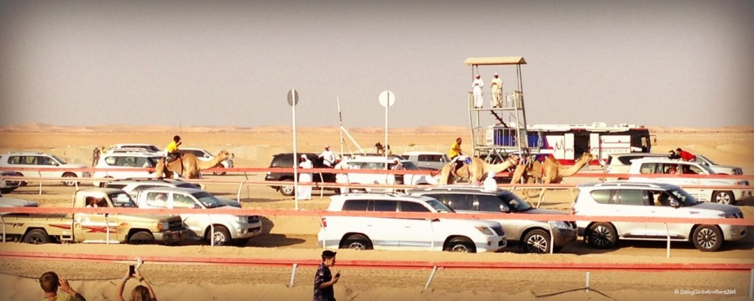 More cars than camels at the camel racing, Al Dharfa Festival