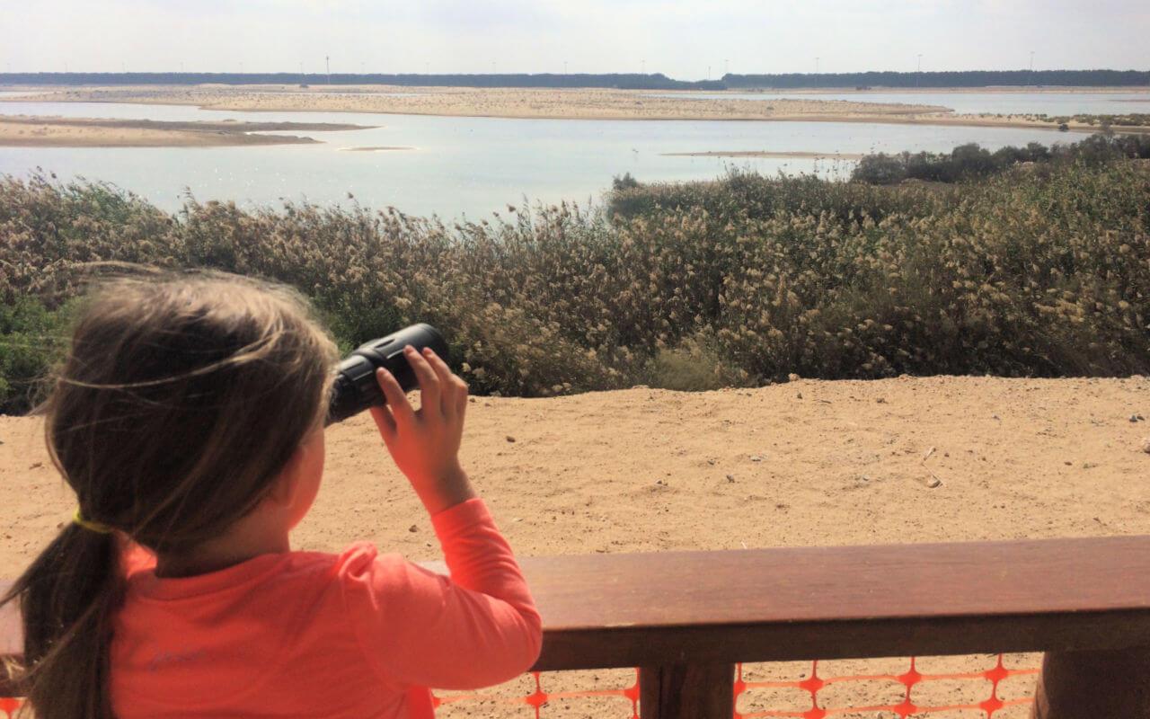 Bird watching at Al Wathba Wetlands